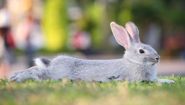 konijnenvaccinatie