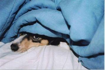 geluidsfobie hond
