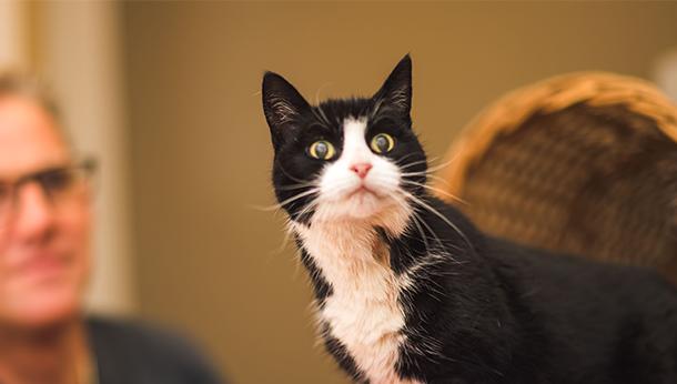 Seniorenconsult voor de kat