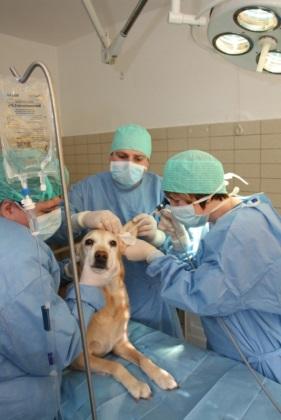 endoscopische behandeling hond dierenartsen van het zicht