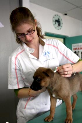 dierenarts vaccineert pup