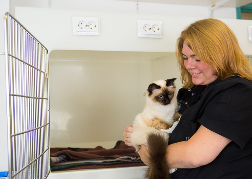 vet nurse with cat