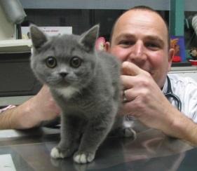 dierenarts met gevaccineerde kitten