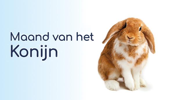 Maand van het konijn