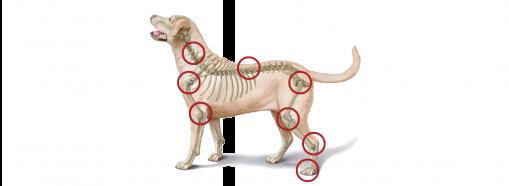 gewrichten hond