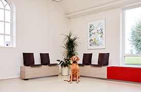 Diergezondheidscentrum Groningen